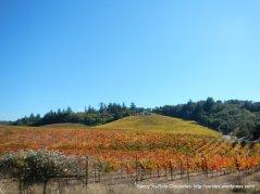 Dry Creek hillside vines