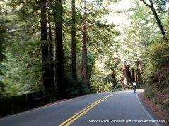 through the redwoods