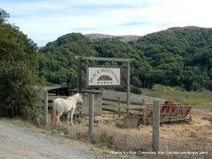 horses-Black Mountain Ranch