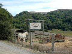 horses-Black Mountain Ranch