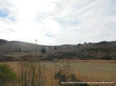 muddy Nicasio Reservoir