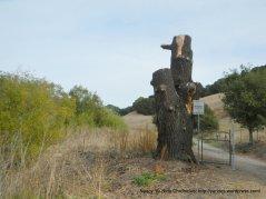 cut stump