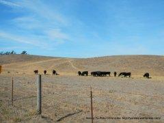 expansive grasslands