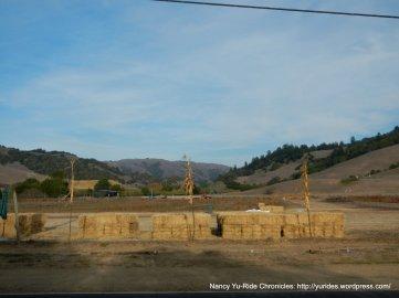 Nicasio Valley Farm