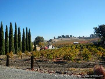 Vinao Winery & Vineyard