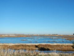 Grizzly Bay marshes wetlands