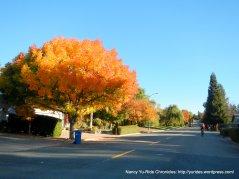 burst of color on Fig Tree