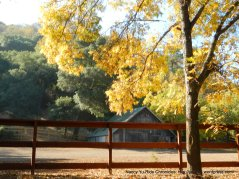horse ranch-Franklin Canyon