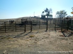 cattle pen