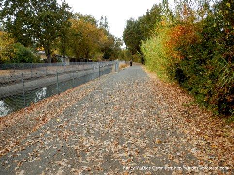 strewn leaves