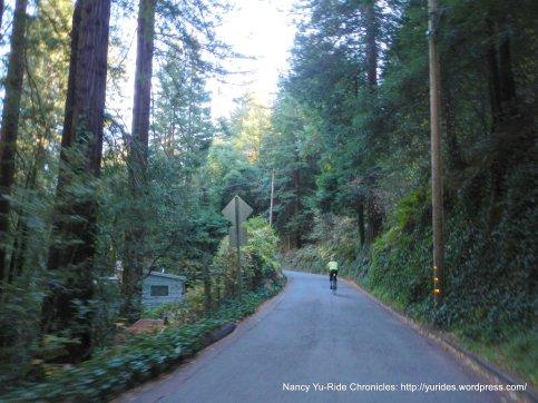 Marion Ave-narrow winding road