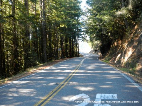 Panoramic Hwy-through the redwoods