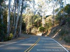Paradise Dr-eucalyptus grove