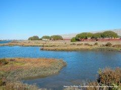 Arrowhead Marsh