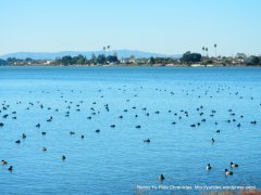 hundreds of waterfowl