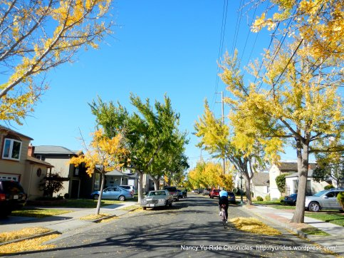 on Marina Dr-fall colors