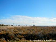 marshlands along trail