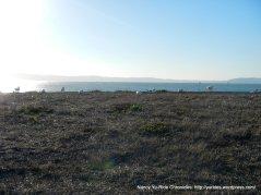 birds & bay views