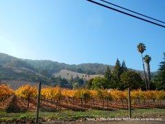 colorful vineyard