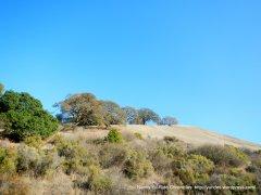 Crockett Hills landscape