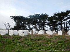 veal calf shelters