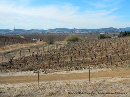 rolling vineyards