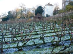 Clos Monmartre vineyards
