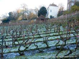 Clos Monmartre vineyards