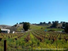 Viano Winery