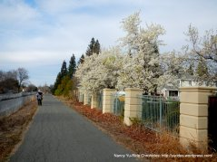 Canal Trail-blossoms