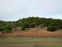 vineyard on Alameda Del Prado