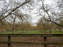 orchard on Indian Valley Rd