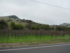 vineayard