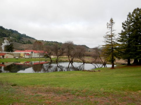 Cheese Factory pond