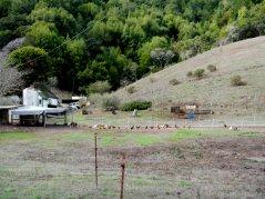 Pt Reyes Petaluma Rd-ranch