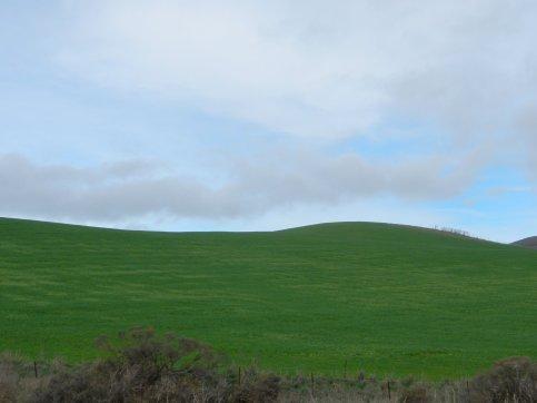 brilliant green hills