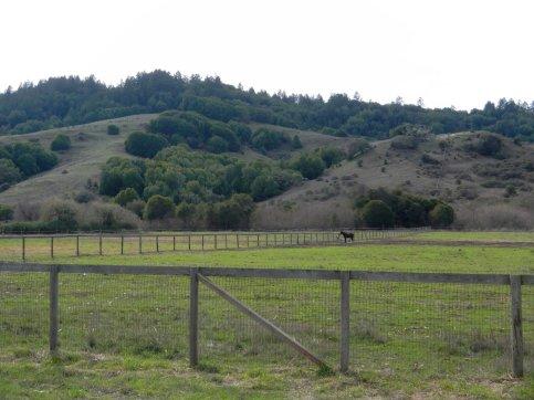 horse ranch-Nicasio Valley