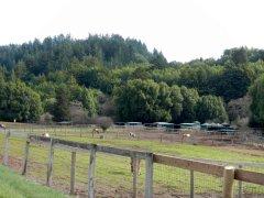 Lucas Valley horse ranch
