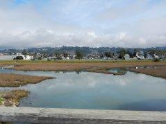 wetlands-SF Bay Trail