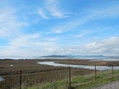 marshes-SF Bay Trail