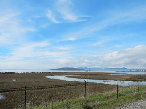 marshes-SF Bay Trail