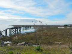 old pier-SF Bay Trail