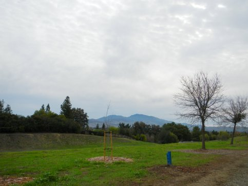 view of Mt Diablo from Canal Trail