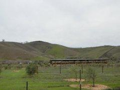 Camino Tassajara-cattle ranch