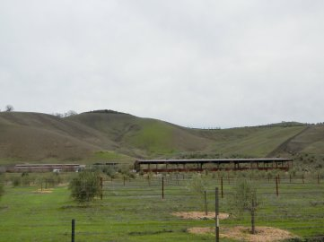 Camino Tassajara-cattle ranch