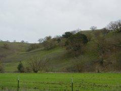 Camino Tassajara-green hills