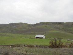 Highland Rd-cattle barn