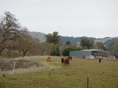 Highland Rd-horse ranches