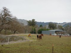 Highland Rd-horse ranches