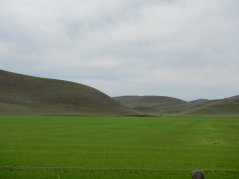 Highland Rd-green meadows